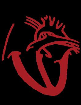 Cardiology Team at Coastal Cardiology Association of Corpus Christi